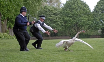 hot-fuzz-screenshot